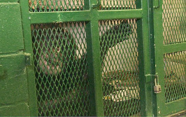NY Court Denies Freedom to Research Chimps at State University at Stony Brook; Ruling Hints at Future Success
