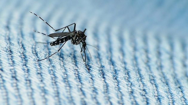 CDC Awards $16 Million to States and Territories to Fight Zika