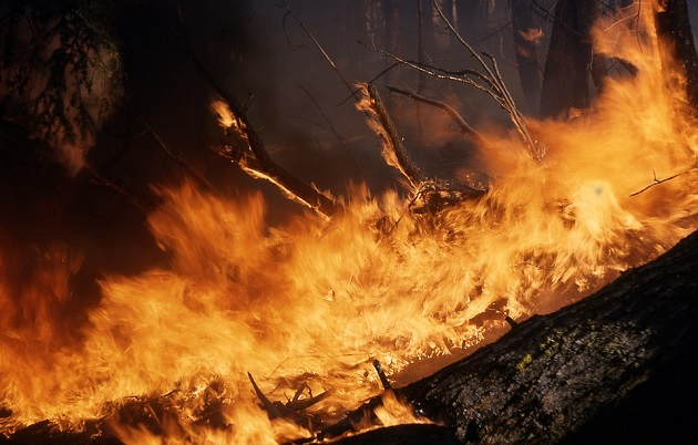 Governor Cuomo Cautions New Yorkers of Wildfire Risks with Above Average Temperatures Expected Through June