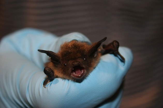 Health Officials Warn Residents to Take Precautionary Measures Following Report of Rabid Bats
