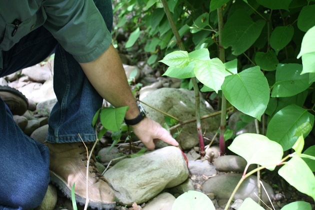 Governor Cuomo Announces Nearly $1.7 Million Awarded for Invasive Species Rapid Response and Control Across New York