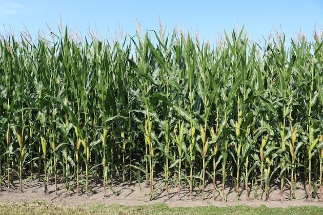 New Bill Promotes Greener Biofuels
