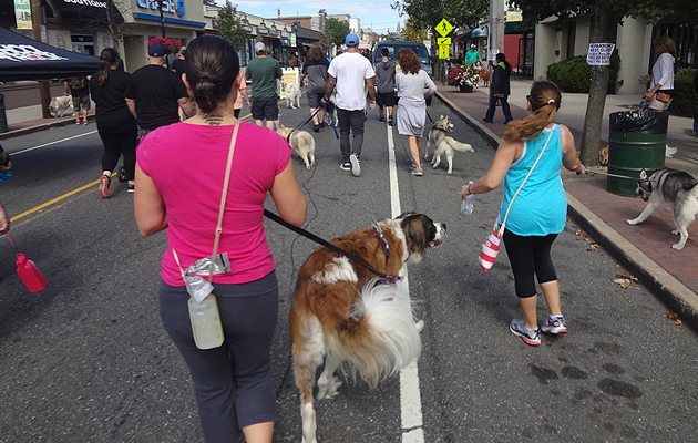 Long Island Goes to the Dogs for a Good Cause; Dog Walk Raises Money, Awareness for Cancer Research